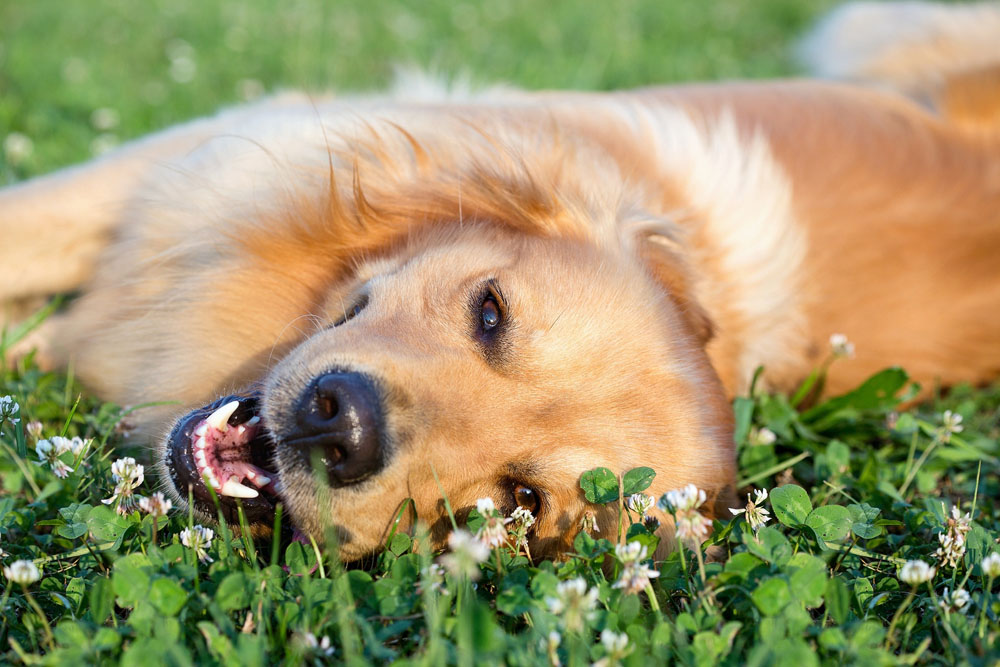 dog laying on grass